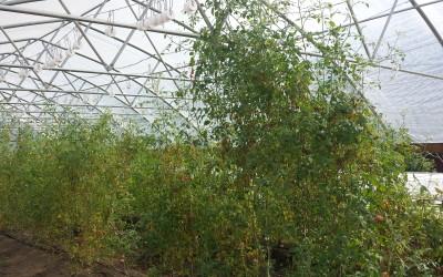 tunnel garden 4